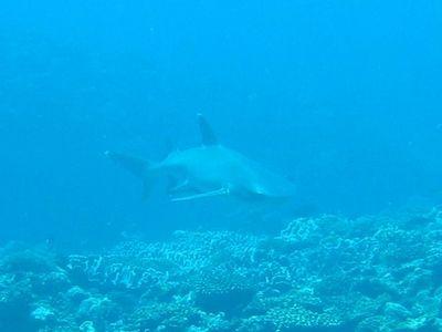 ツアー中にサメ。やっぱり顔がこわい